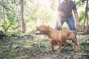Pitbull Raças De Cachorro